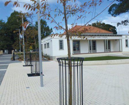 Kiwi Tree Grate & Tree Guard