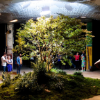 Street Spotlight: New York City's Lowline