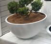 urban bowl